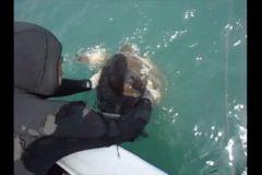Mergulhador salva tartaruga de rede de pesca em Arraial do Cabo-RJ 4
