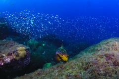 Mergulho na Laje de Santos 2