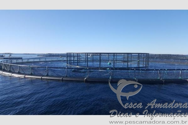 Ministro da Pesca Helder Barbalho visita fazendas de cultivo de salmao na Noruega 4
