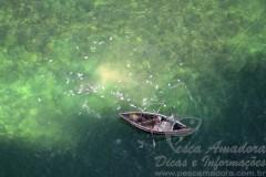Morador flagra pesca com bomba em Salvador-BA  (Foto: Valter Pontes)