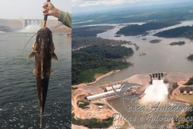 Mortandade de Piraibas no Rio Teles Pires e denunciada
