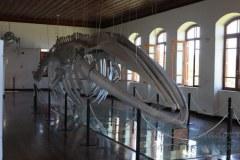 Museu de Pesca recebe exposicao sobre preservacao marinha em Santos 2