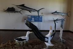 Museu de Pesca recebe exposicao sobre preservacao marinha em Santos 4