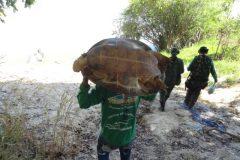 Naturatins apreende equipamentos de pesca predatoria e salva tartarugas 2