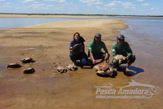Naturatins apreende equipamentos de pesca predatoria e salva tartarugas 3