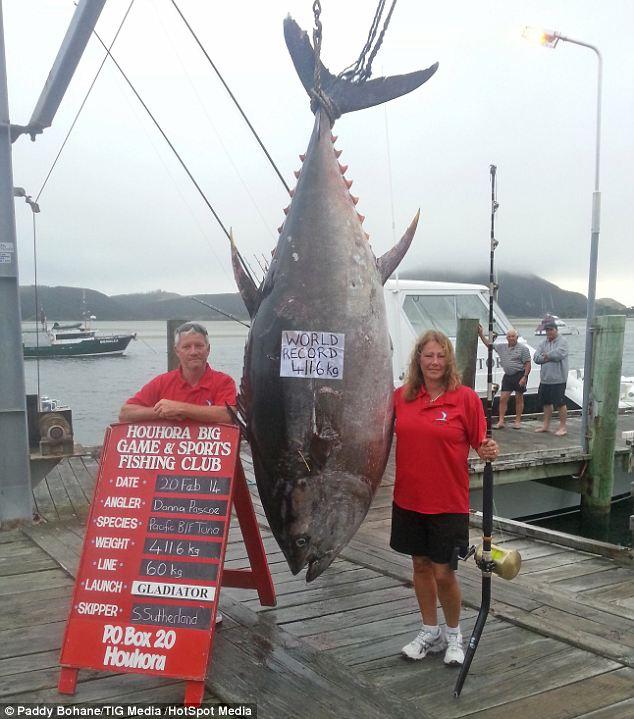Neozelandeza com atum rabilho de 416kg e bate recorde mundial 2