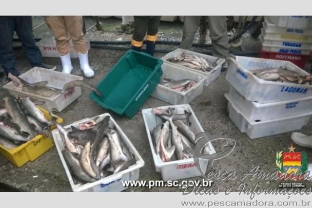 Operacao conjunta apreende 17 toneladas de pescado em Torres-SC 2