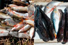 Operacao conjunta apreende 18 mil metros de redes e 450 kg de pescado ilegal na Bahia 2