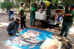 Operacao conjunta apreende 66 kg de pescado ilegal em Mato Grosso 3
