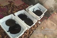 Operacao conjunta prende traficante de peixes ornamentais em Santarem-PA
