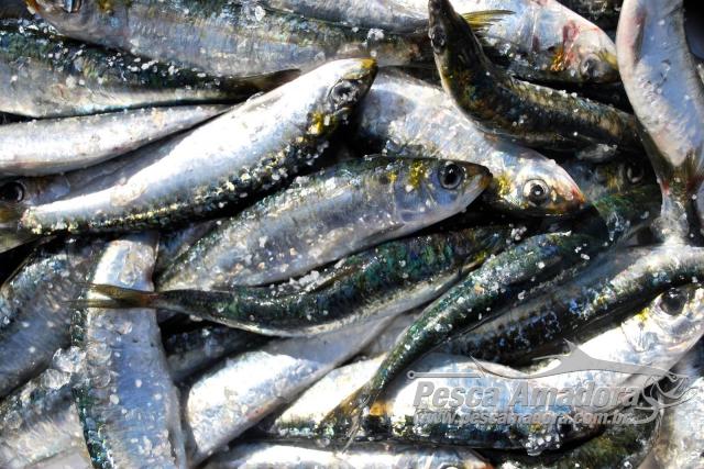 Operacao da PF e Ibama apreende 14 toneladas de pescados no RS 2