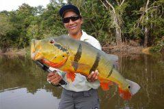 Ornamento da pesca esportiva do tucunare no Amazonas 4