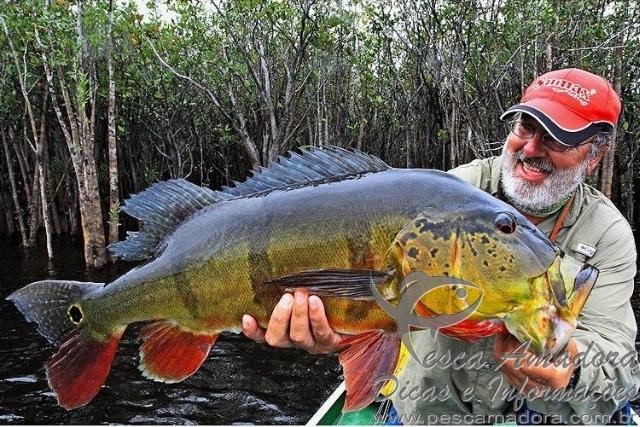 Os beneficios da pesca esportiva e o conceito do pesque e solte 2