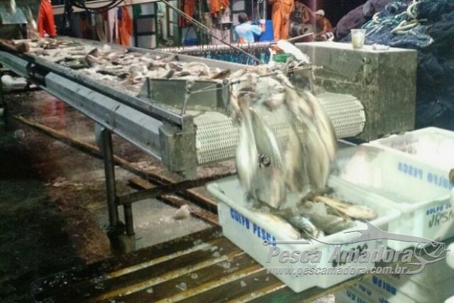 PF prende 15 suspeitos de pesca ilegal na Ilha Grande em Angra dos Reis-RJ