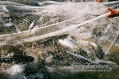 PL defende restricao de venda de redes de pesca a pescadores amador 2