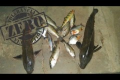PM apreende 40 kg de pescado ilegal durante abordagens em Goias 2