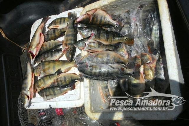 pm-apreende-47-kg-de-pescado-ilegal-durante-blitz-no-tocantins-2