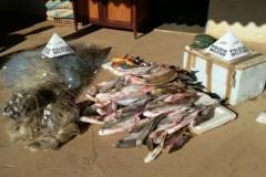 PM apreende 69 kg de peixes pescado com petrecho proibido em MG 2