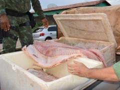 PM apreende cerca de 230 kg de pescado ilegal no TO