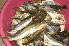 PM apreende mais de 16 kg de pescado e redes em Monte Carmelo-MG