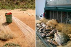 pm-apreende-redes-13-kg-de-pescado-e-autua-dois-por-pesca-ilegal-em-barragem-de-alegre-es-2