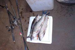 pm-autua-duas-pessoas-e-apreende-17-kg-de-pescado-ilegal-no-parana