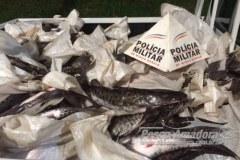 PM prende duas pessoas por transportar 400 kg de pescado ilegal em Patrocinio-MG
