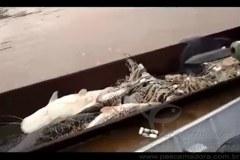 PMA aborda duas pessoas praticando pesca ilegal no Rio Cuiaba-MT