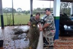 PMA apreende 10 redes e solta 9 kg de peixes vivos no rio Pardo em MS