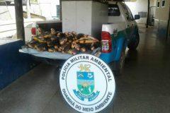 pma-apreende-100-kg-de-pescado-ilegal-em-rancho-no-rio-miranda-ms