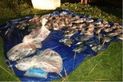 PMA apreende 103 kg de pescado ilegal em Van Escolar