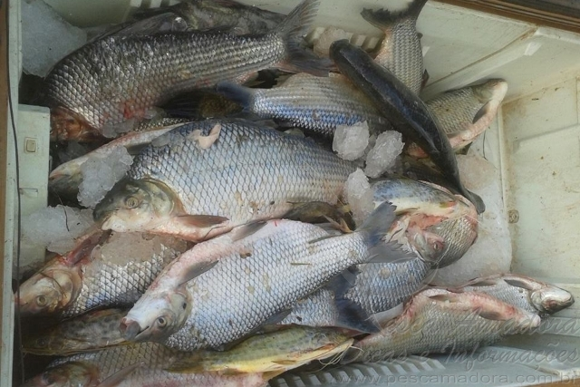 PMA apreende 12 redes e 50 kg de pescado na Serra do Facao em Goias 2