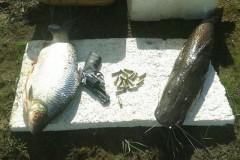 PMA apreende 12 redes e 50 kg de pescado na Serra do Facao em Goias 3
