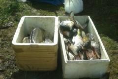 PMA apreende 12 redes e 50 kg de pescado na Serra do Facao em Goias 8