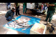 pma-apreende-120-kg-de-pescado-ilegal-e-aplica-multa-de-r-124-em-mt-2