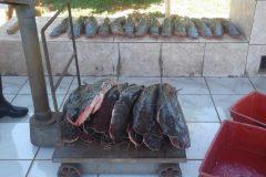 pma-apreende-133-kg-de-pescado-ilegal-durante-piracema-em-ms