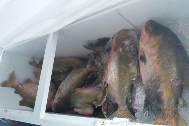 PMA apreende 1,4 toneladas de tambaqui e pirarucu pescados ilegalmente no AM 1