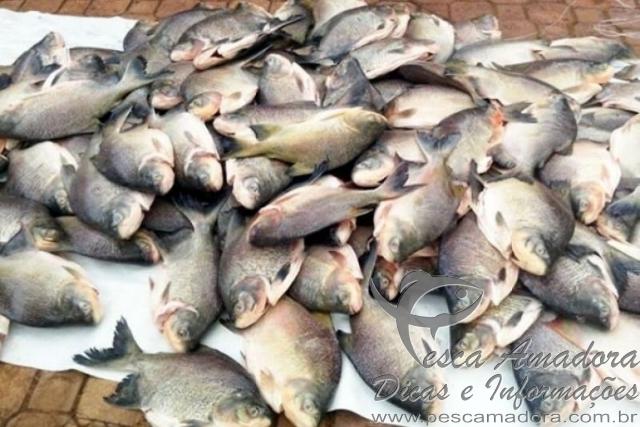 PMA apreende 158kg de pescado irregular no MT