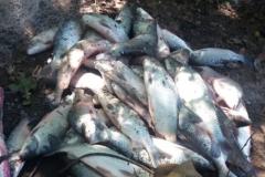PMA apreende 179 kg de pescado em operacao contra a pesca predatoria em Goias