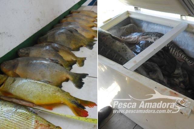 pma-apreende-186-kg-de-pescado-e-aplica-mais-de-11-mil-em-multas-por-pesca-ilegal-no-rio-miranda-ms-4