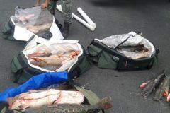 PMA apreende 195 kg de pescado e prende desembargador por pesca predatoria no MT 2