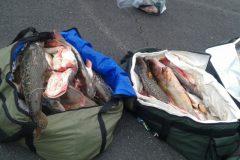 PMA apreende 195 kg de pescado e prende desembargador por pesca predatoria no MT 3