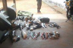 PMA apreende 195 kg de pescado e prende desembargador por pesca predatoria no MT 5