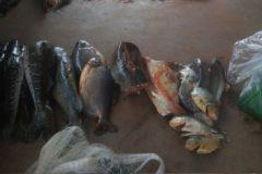 PMA apreende 195 kg de pescado e prende desembargador por pesca predatoria no MT 6