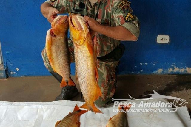 PMA apreende 20 kg de pescado ilegal do Rio Amambai-MS