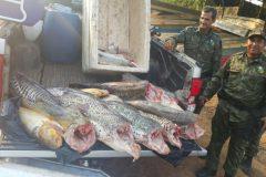 pma-apreende-210-kg-de-pescado-ilegal-durante-fiscalizacao-em-mt-2