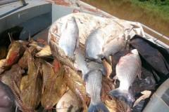 PMA apreende 25 kg de peixes e 200 metros de rede no lago de Itaipu no PR 3