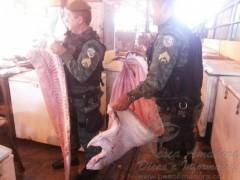 PMA apreende 250 kg de pirarucu em Manaus-AM