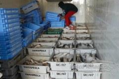 PMA apreende 3.000 kg de pescado ilegal no Rio Grande do Sul