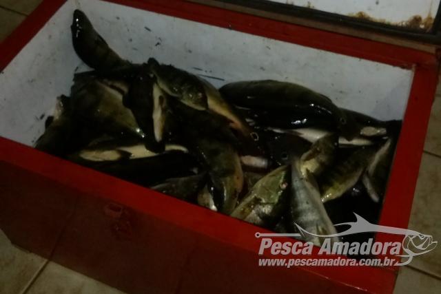PMA apreende 30 kg de pescado ilegal no Rio Quiteria-MS